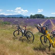 Camping Rose de Provence - Verdon***