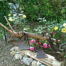 Fleurs au camping Rose de Provnece .Riez