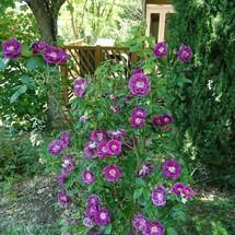 Allées fleuries du Camping Rose de Provence à Riez